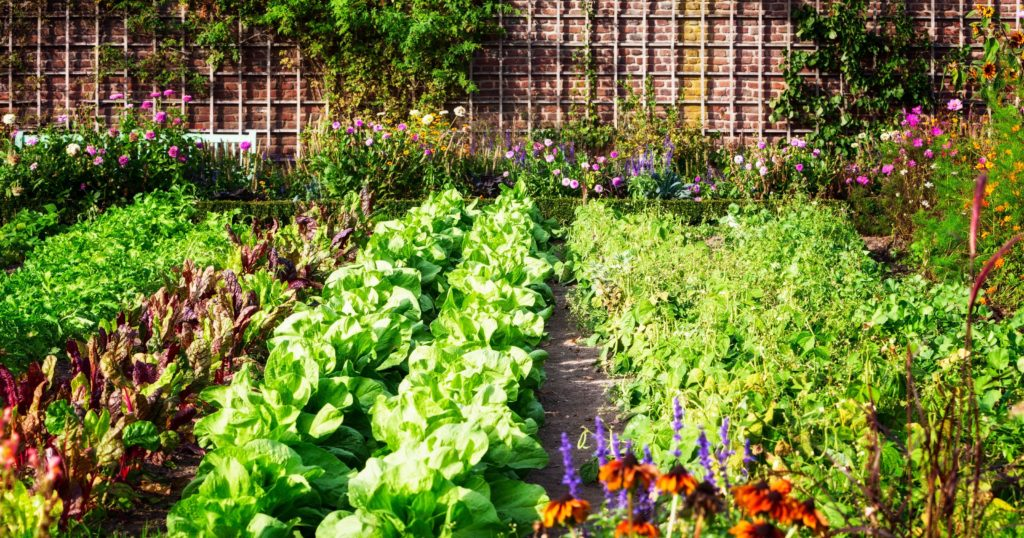 Vegetable gardens for beginners: 6 steps to get started