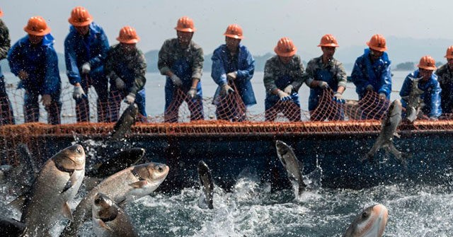 Kenya to Ban Chinese Fish Imports After Beijing Destroyed Local Fishing Industry