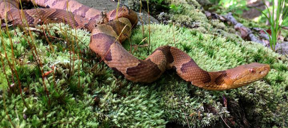 Spike Protein = Spike Protein ≈ Snake Protein
