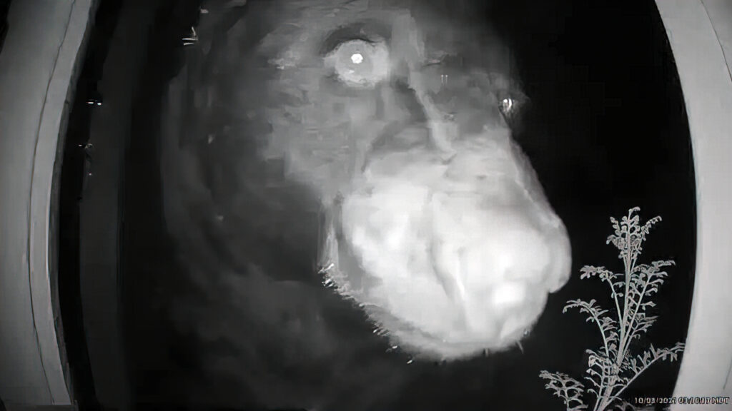 Doorbell camera captures bear walking up to family's front door in the middle of the night
